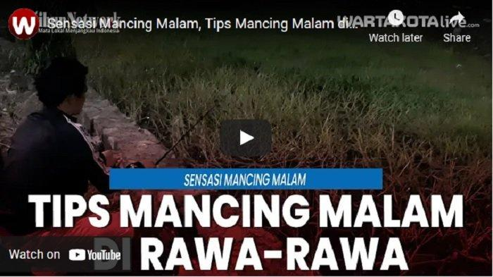VIDEO Tips Mancing Malam Hari di Rawa-rawa, Target Ikan Lele, Gabus, dan Mujair