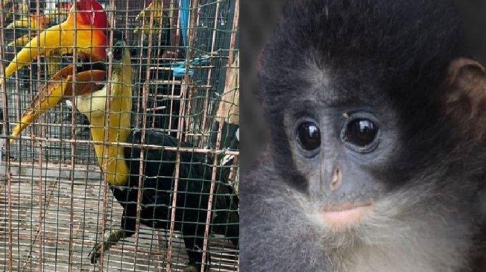 Ini Daftar Hewan Langka dan Tumbuhan Pemakan Daging yang Diselamatkan Polisi Hutan Dua Pekan Ini