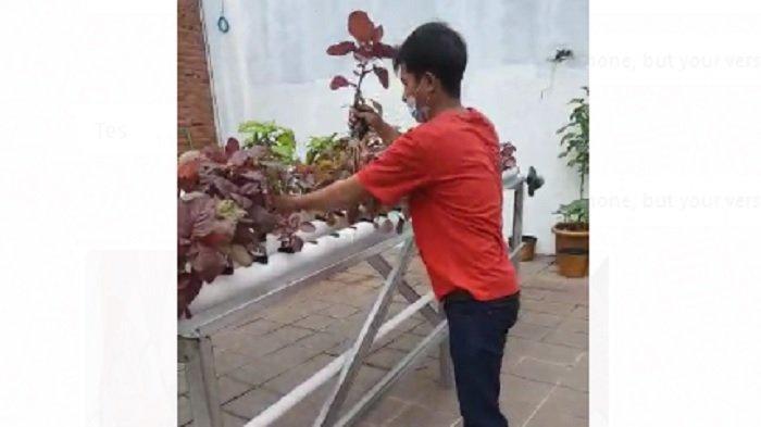 Tips dan Trik Bertanam Sayur Hidroponik di Lahan Sempit, Tidak Sulit dan Hasilnya Memuaskan