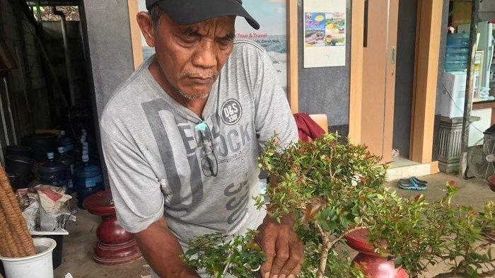 Trik atau cara mendesain pohon bonsai dengan menggunakan kawat bonsai, dibeberkan pedagang tanaman hias Sanggar Putra Muria, Suyatno di Kelurahan Jatirangga, Kecamatan Jatiasih, Kota Bekasi, Selasa (2/2/2021).