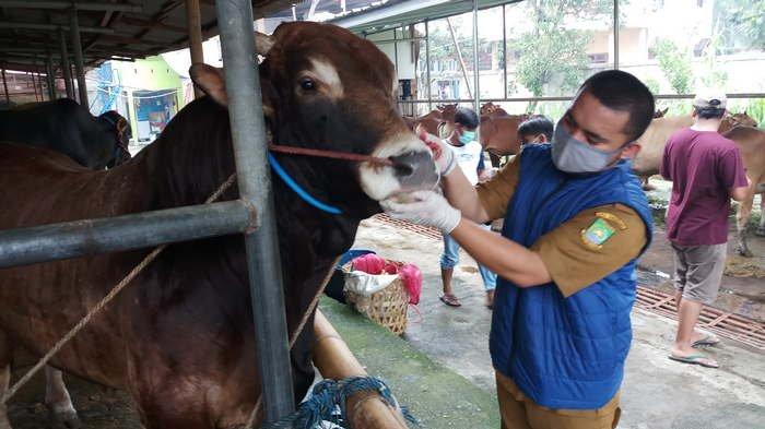 Aturan Protokol Kesehatan saat Idul Adha Disiapkan, Pembagian Daging Hewan di Bekasi Door to Door