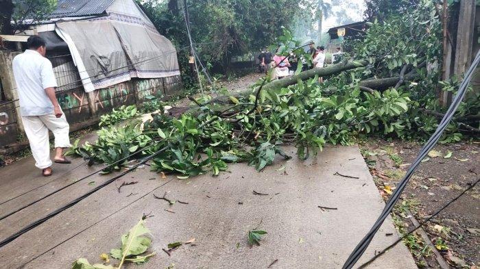 Tiga Bencana Dalam Satu Hari Sambangi Kota Depok, dari Kebakaran Hingga Pohon Tumbang