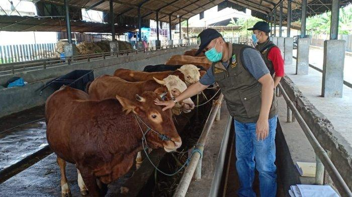 Hewan Kurban di Kabupaten Bekasi Tak Perlu Diswab Test, Covid-19 Hanya Menyerang Manusia