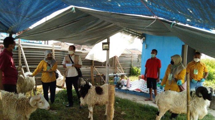 Sejumlah Hewan Kurban di Lapak Pedagang di Banten Ditemukan Dalam Kondisi Sakit, Begini Gejalanya