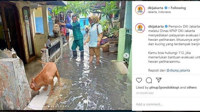 DKPKP Jakarta Gelar Pelayanan Evakuasi dan Kesehatan Hewan terdampak banjir, ini Lokasi dan Waktunya