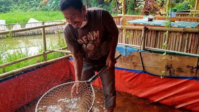 Berawal dari Memberdayakan Lingkungan, Mulyadi Bisa Budidaya Ikan yang Omzetnya Menguntungkan