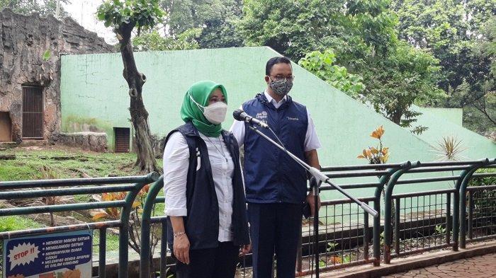 Pengelola TMR Bingung Dua Ekor Harimau Sumatera Bisa Tertular Virus Covid-19