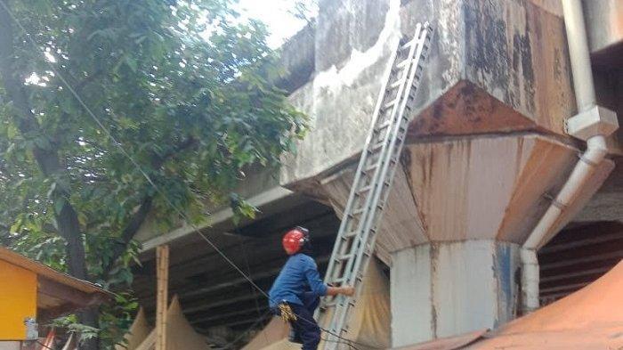 Seekor Kucing Terjebak 2 Hari di Atas Jalan Tol Layang Ancol Dievakuasi Petugas Damkar Jakarta Utara
