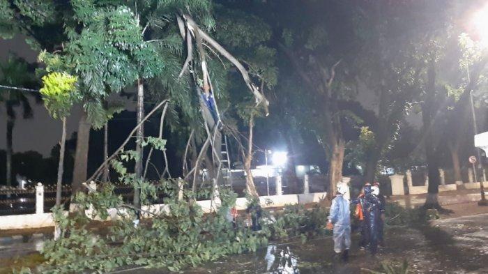 Pohon Mahoni Depan Markas Kopassus Tersambar Petir, Petugas Evakuasi Pohon Tumbang Tengah Malam