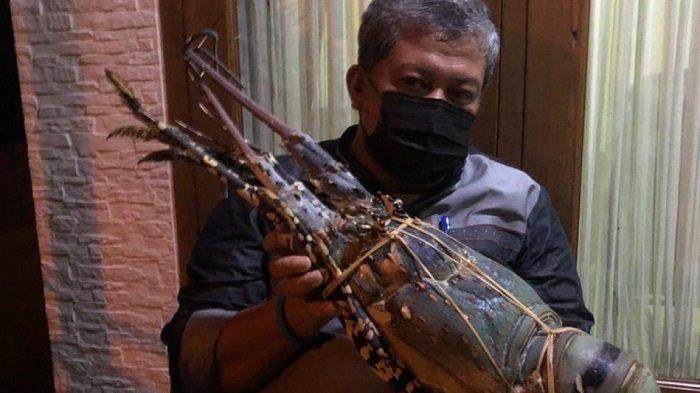 FAHRI Hamzah Kena Semprot Susi Pudjiastuti seusai Pamer Lobster Sebesar Bayi, Induk Jangan Ditangkap