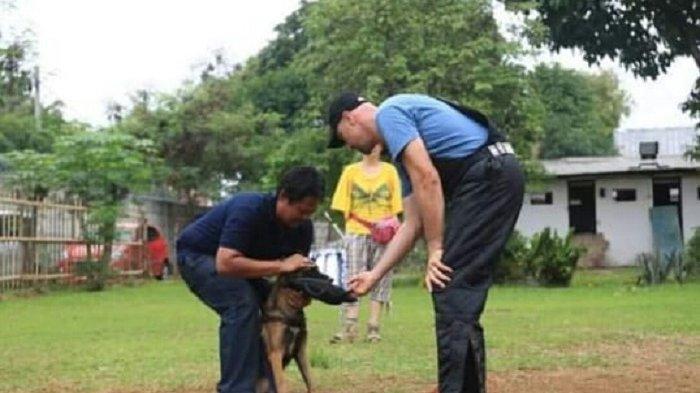 Bombom dari Komunitas Anjing Blackface Club : Anjing jadi Galak karena Ada Faktor Pemicunya