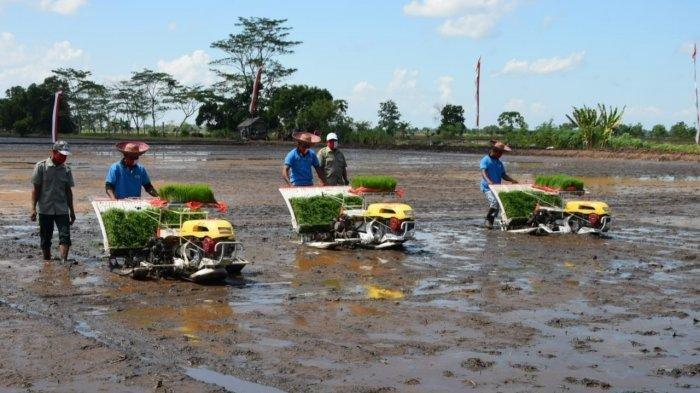 Tiga Menteri Datangi Calon Food Estate Kalteng Tanpa Mentan, DPR Bilang Begini