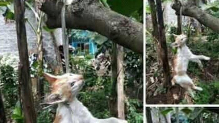 FOTO Kucing Digantung hingga Mati di Pohon Setelah Makan Merpati di Bali Viral, Ini Kronologinya
