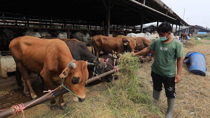Pemkot Depok Minta Lapak Penjualan Hewan Kurban Perhatikan Kesehatan dan tak Ganggu Ketertiban Umum