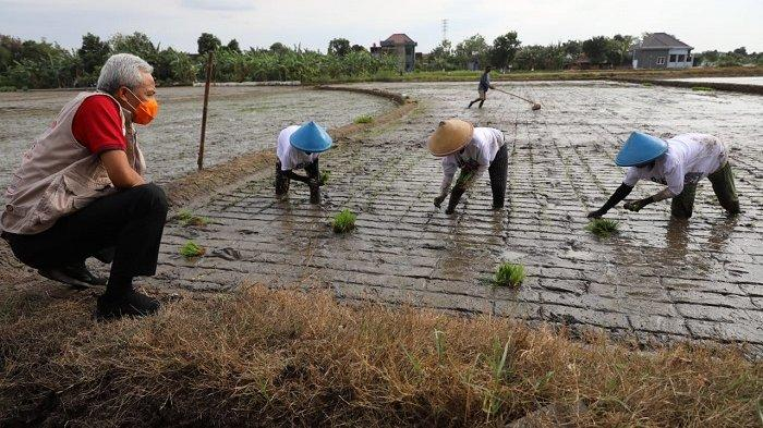 Kemenko Perekonomian Ungkap Sektor Pertanian Buka Peluang Terbukanya Lapangan Pekerjaan