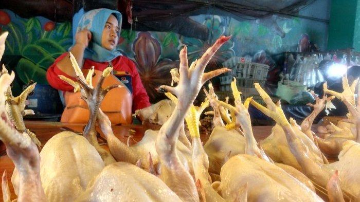 VIDEO: Imbas Corona, Harga Ayam Potong di Pasaran Terjun Bebas