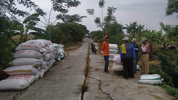 Harga Gabah di Kabupaten Bekasi Anjlok di Bawah Harga Pokok Penjualan