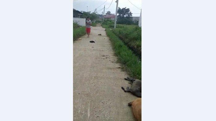 ANEH! Sejumlah Hewan Peliharaan Mati Mendadak di Cibarusah Bekasi, Kapolsek dan Camat Benarkan