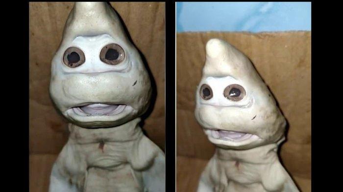 Heboh bayi ikan hiu mirip wajah manusia. Begini penampakannya
