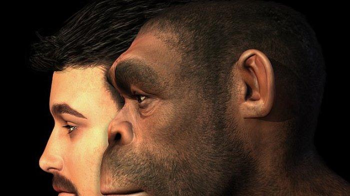 Manusia Purba Homo Erectus Terakhir Ditemukan Hidup 110000 Tahun yang Lalu Sesuai Pengukuran Karbon