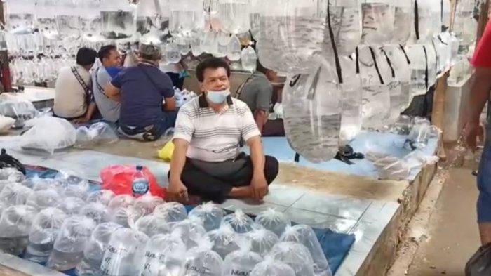 Pasar Ikan Hias Parung Makin Berkibar di saat Pandemi Virus Corona