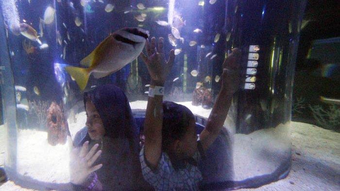Sensasi Menikmati Liburan yang Seru di Jakarta Aquarium