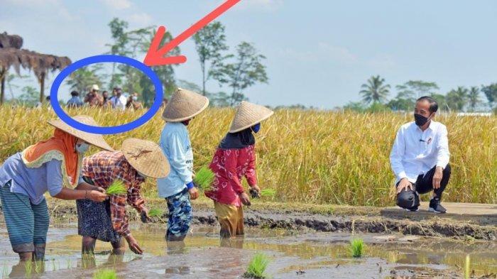 Bedah Foto Jokowi Tinjau Para Ibu Tanam Padi Sendirian, Roy Suryo : Bocor di Belakang