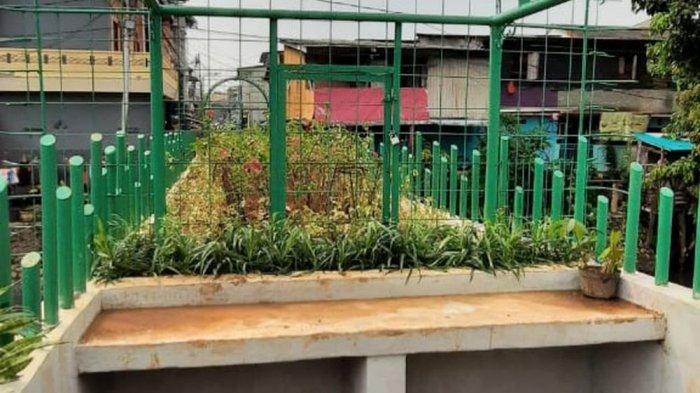 JPO Kali Senting Dulu Lokasi Akses Tawuran Kini Berubah Jadi Taman Indah, Begini Kondisinya