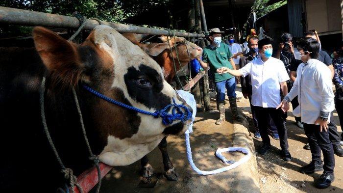 Anggota Komisi XI DPR RI dari Fraksi Gerindra Kamrussamad saat menyerahkan hewan kurban dalam Idul Adha 1442 H.