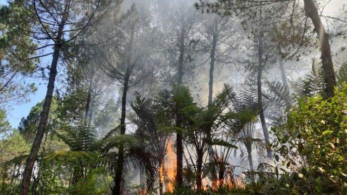 Leonardo DiCaprio Disemprot Presiden Brasil Soal Kebakaran Amazon Sempat Kritik TPA Bantar Gebang