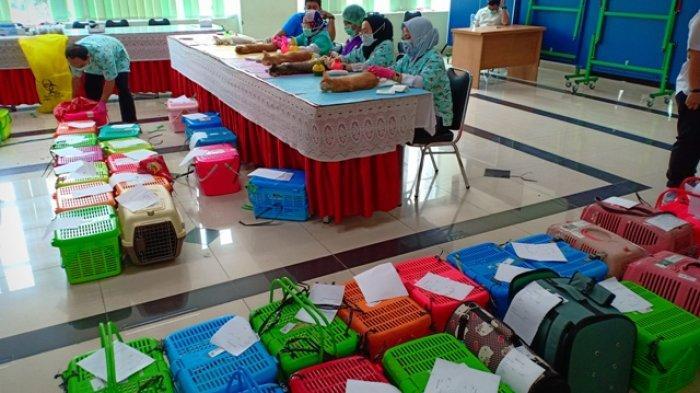 8 Dokter Kebiri 136 Ekor Kucing Jantan di Menteng, Upaya KPKP Jakarta Pusat Menekan Populasi Kucing