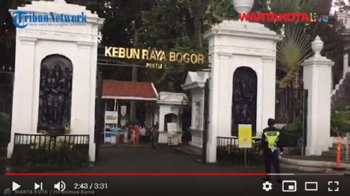 VIDEO Kebun Raya Bogor Jadi Tujuan Wisata Warga Jabodetabek di Masa Libur Panjang