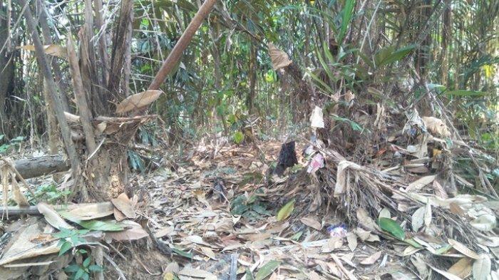 VIDEO: Kebon Salak Condet di Pinggir Kali Ciliwung Bakal Tergusur Program Normalisasi