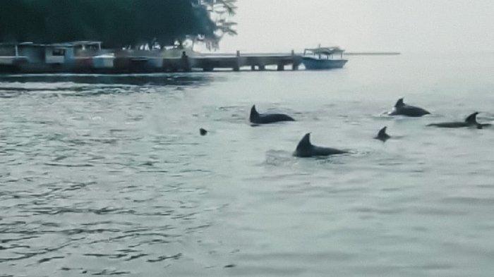 Belum Kantongi Sertifikat CHSE, Wisata di Kepulauan Seribu Belum Bisa Uji Coba untuk Dibuka