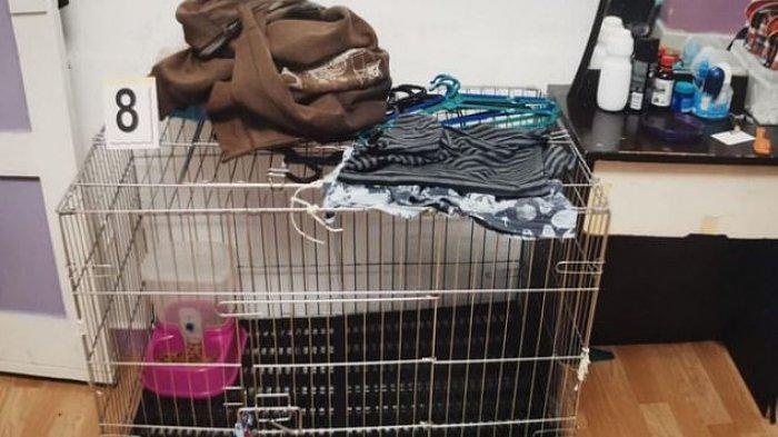 Bocah 5 Tahun Tewas Disiksa Orang Tua Kandung Masuk Kandang Kucing, Disiram Air Mendidih