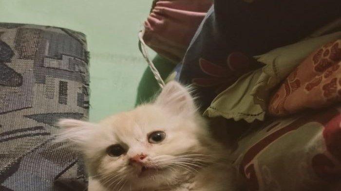 Lagi Ramai Jagal Kucing, Ternyata Warga Depok Kehilangan Kucing, Usianya Baru 4 Bulan
