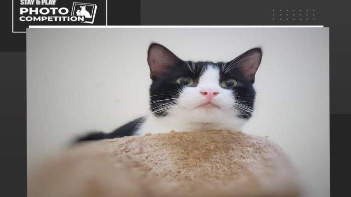 Ramai Jagal Kucing, Lagi Warga Depok Kehilangan Kucing di Grogol Depok, Bagi Penemu Dapat Imbalan