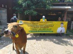 Mad Romli Salurkan 29 Ekor Sapi ke Seluruh Kecamatan di Kabupaten Tangerang