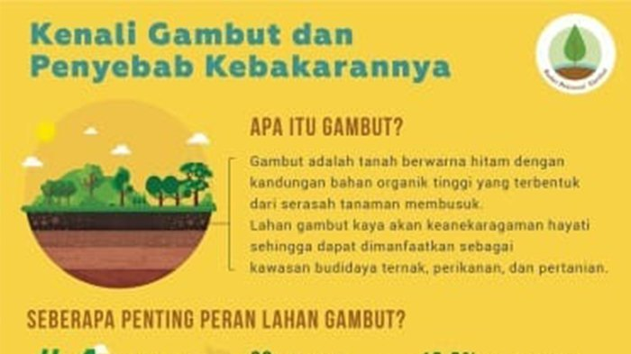 Kementan Harus Pikir Ulang Pemanfaatan Gambut untuk Pertanian