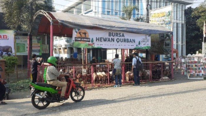 Di Lapak Penjual Hewan Kurban di Bekasi Ini, Hafal Lima Juz Al Quran Gratis Kambing