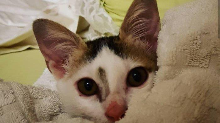 Sambil Posting Foto Hewan Peliharaannya, Anies Baswedan Instruksikan Tunda Penangkapan Kucing Liar