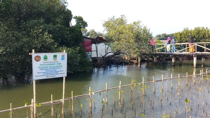 Libur Muharram, Warga Ramai Kunjungi Wisata Mangrove Tarumajaya Bekasi