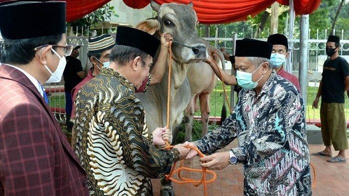 Masjid Istiqlal Bakal Sembelih 36 ekor Hewan Kurban, Termasuk Sapi dari Presiden Seberat 1 Ton