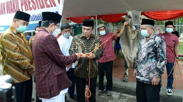 Jokowi Kurban Sapi ke Masjid Istiqlal, Berbobot 1.088 Kilogram, Diambil dari Tulang Bawang Lampung