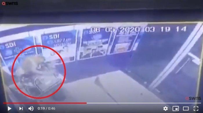 Rekaman CCTV di Bank Sentral India memperlihatkan seekor memanjat mesin ATM, dan kemudian membuka bagian depannya.