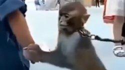 Bandingkan Gelang Anak Kecil & Kalung Besi di Lehernya, Polah Monyet Ekor Panjang Bikin Nyesek