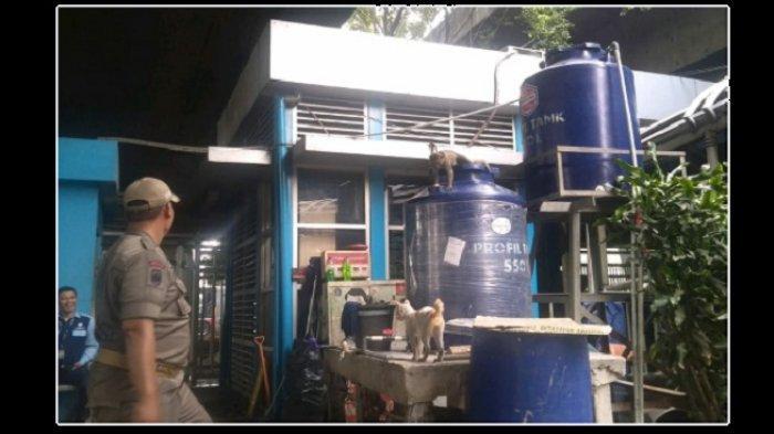 BREAKING NEWS: Petugas Belum Berhasil Evakuasi Monyet di Sekitar Halte Transjakarta dan JPO Grogol