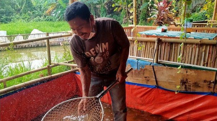 Mulyadi memeliha ikan di aliran sungai Puri Pamulang, Pamulang, Tangerang Selatan, Jumat (22/7/2021). Masyarakat bisa ikut memberi makan ikan-ikan ini yang jumlahnya sekitar 4.000 ekor.