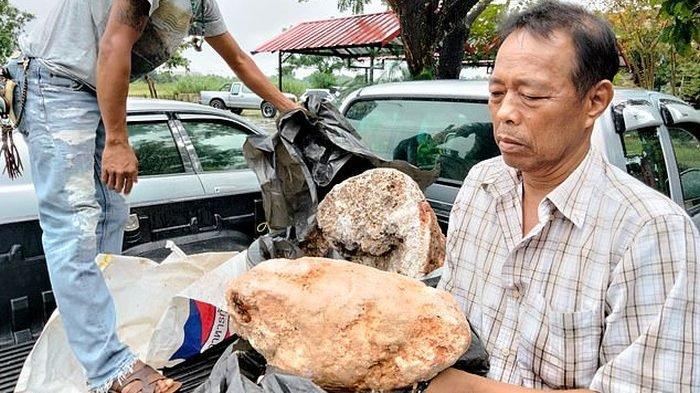 Nelayan Thailand Kaget Temukan Muntahan Paus Terbesar di Dunia, Dihitung-hitung Nilainya Rp46 Miliar