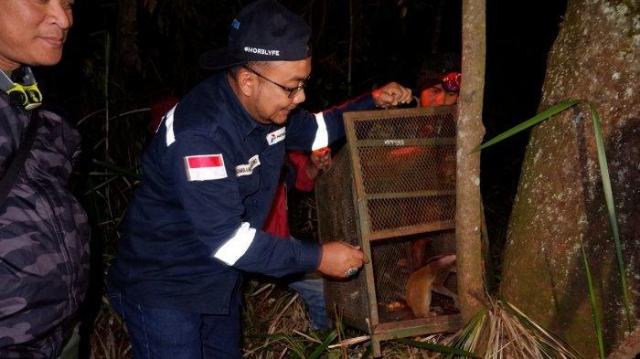Pertamina Kembalikan Kukang Jawa Ke Habitatnya